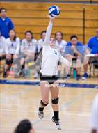 This MaxPreps.com professional photo is from the gallery Palo Alto @ Los Altos which features Los Altos high school athletes playing  Volleyball.
